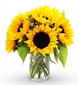 Boydita Flowers Delivered Sunflowers