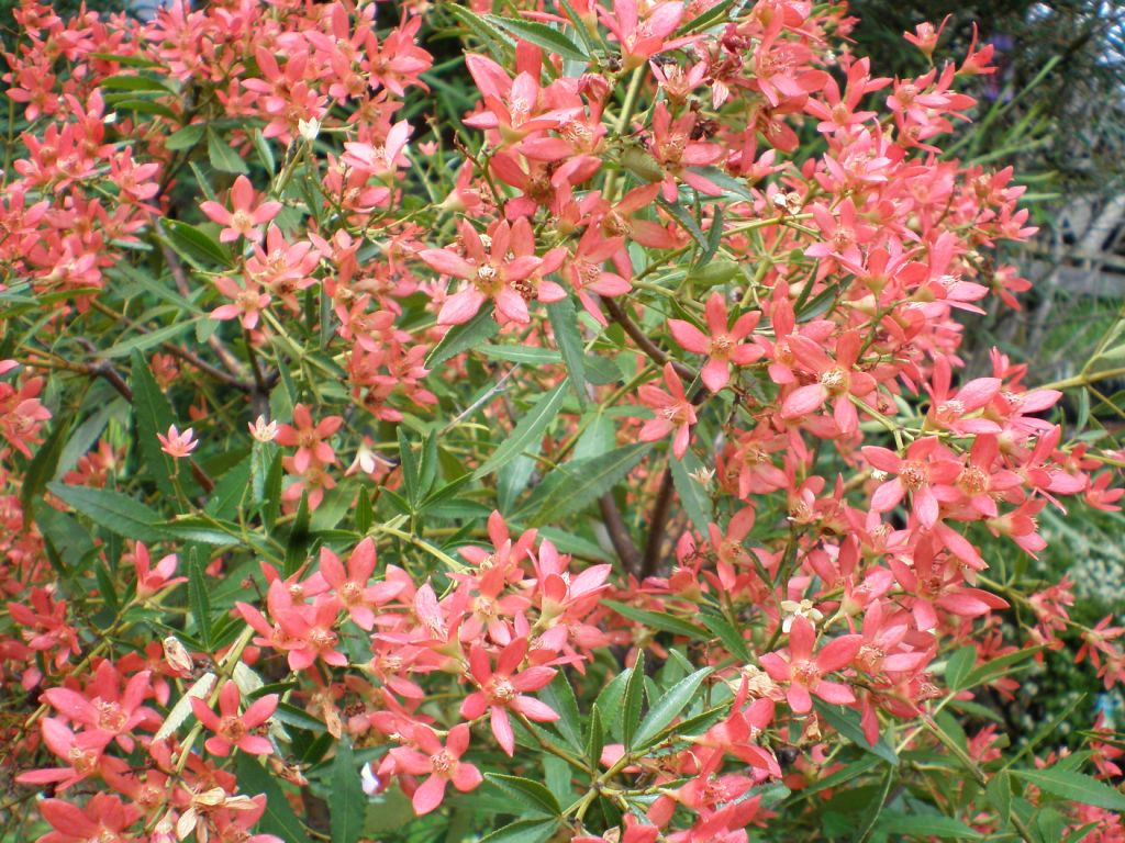 flower - What Month Is Christmas In Australia